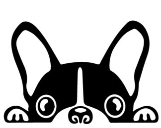 Peeking Boston Terrier Car Decal